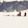 Dog Sledge Team on the glacier