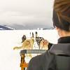 Husky Dog Sled Team in Alaska with Lady Musher