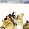 Husky Dog Sled Team