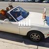 Deer Driving a car in Austin Texas