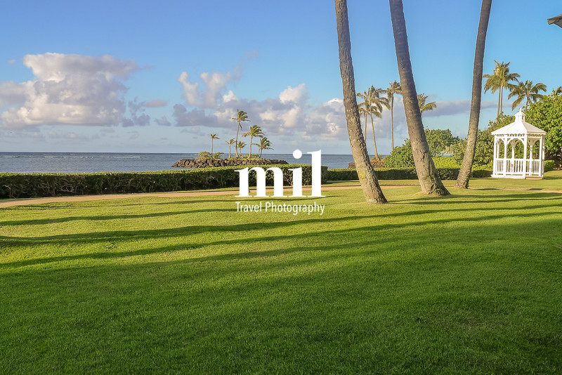 Garden in Hawaii just after sunrise