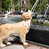 Dog Fountain in St Lawrence Market district of Toronto