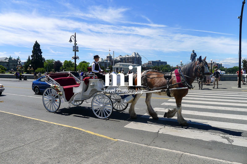 Horse and cart in Victoria Vancouver Island