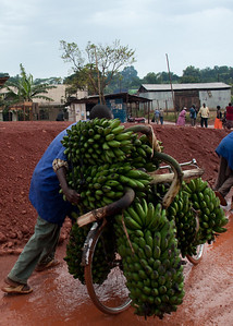 Plantains and bananas are a major commodity in Uganda
