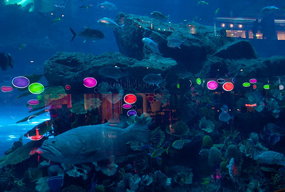 Indoor aquarium reflecting the lights of one of 1,200 shops in the world's largest mall
