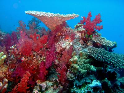 Fiji, August 2012
