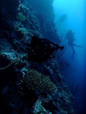 Corals feed in the current off the Great White Wall