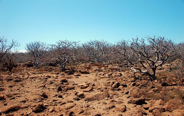 Our first land excursion on North Seymour Island – windswept and harsh