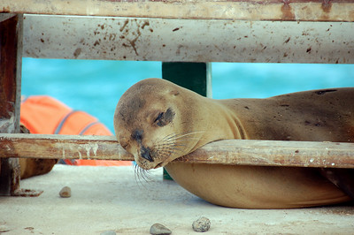 VERY relaxed sea lion