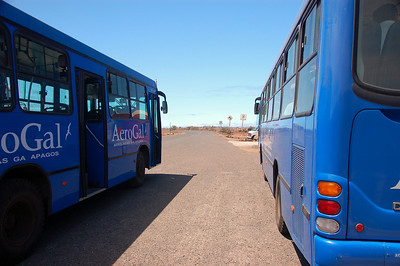 Buses for the short drive from Baltra Airport to the harbor