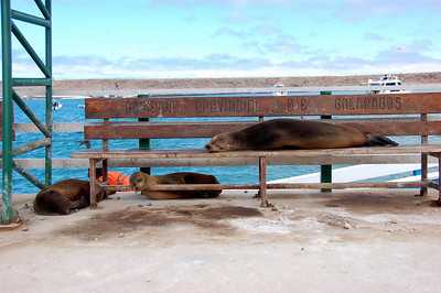 Sea lions hanging out at the dock – photogenic!