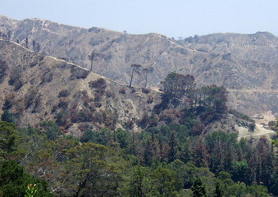 Griffith Park, in the aftermath of May wildfire