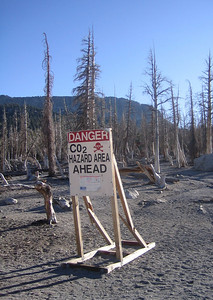 Carbon dioxide tree-kill zone below McLeod Lake
