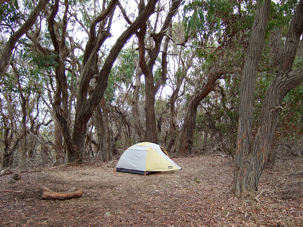 "Our ""environmental campsite"" under the eucalyptus trees – by hiking in just a short way, we had this peaceful spot all to ourselves"