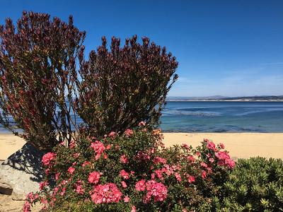 Monterey Breakwater