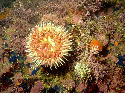 Sea anemone and colorful sponges
