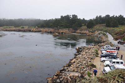 Whaler's Cove at Point Lobos, foggy but calm