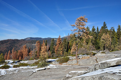 Sadly, the panoramic views were filled with dead trees in every direction, victims of the long California drought