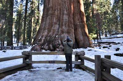 General Sherman Tree, the largest tree on earth by volume