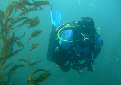 Ray in the kelp