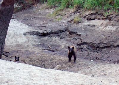 Mama Bear keeps a watchful eye on us