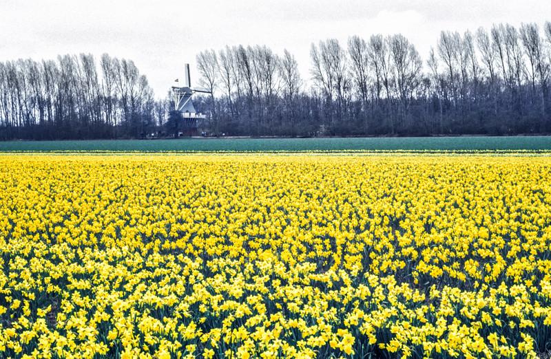 The Fields of Keukenhof