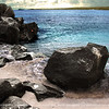 This is part of the shoreline at Suarez point in espanola Island.