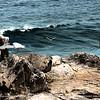 A sea gulls' lair.