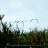 DSC_9517-Espanola-Isle-web