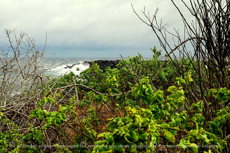 This is a southerly view of the island.