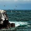 The sea gulls make the rocks look like snow capped.