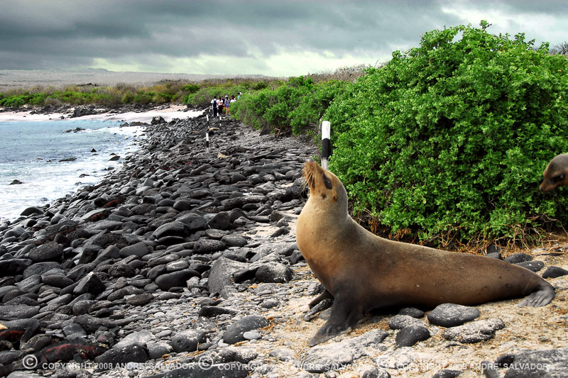 A sea lion on Espanola Island.