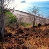 RABIDA ISLAND, GALAPAGOS, ECUADOR