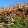 Potogenic Rabida Island