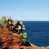 The vegetation at Rabida Island consists mainly of Opuntia Cactus, Palo Santo tress and scrubby bushes.