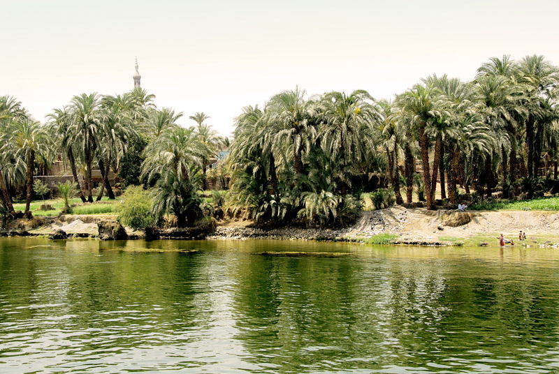 A lot of the flat areas by the Nile are for agriculture. These are date palms with the tower of a temple beyond. This is the west bank.