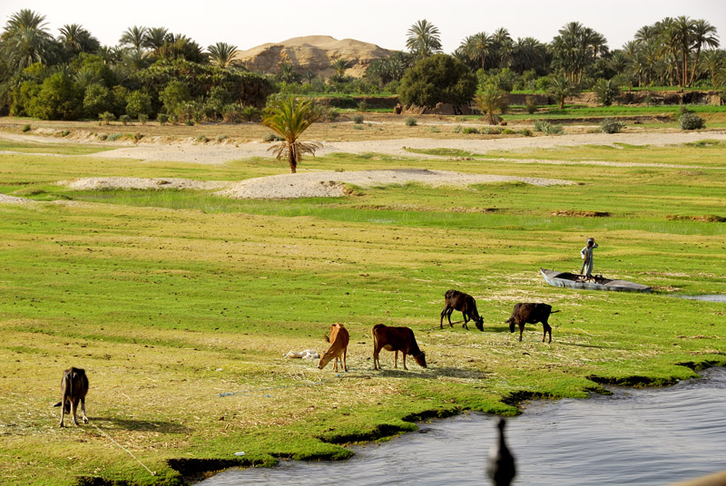 egyptian flood in the nile Egypt, sudan, and ethiopia will soon sign contracts with two french companies for the technical studies on the dam, according to the irrigation minister editorial pick in pictures: nile's.