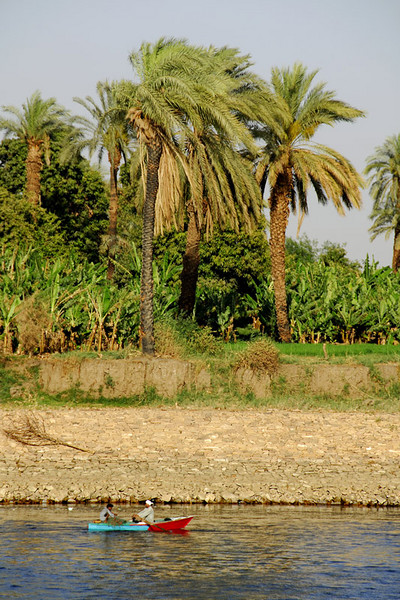 What you see here are date palms and bananas.