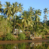 Palms. The Mandovi-flood. Goa. India