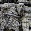 Walenstein Garden: Drip wall of contorted masks, snakes, owls and grotesque monsters hide among the grey stalactites