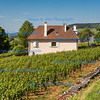 Vineyards, Burgundy