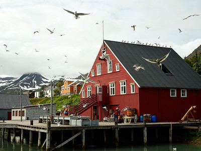 Historic Herring village of Siglufjordur 1