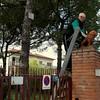 Imola viewer on ladder