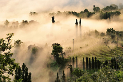 Montalcino Countryside-- Rolling Fog at Sunrise