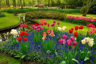 Keukenhof Park, Flowers in April - 1