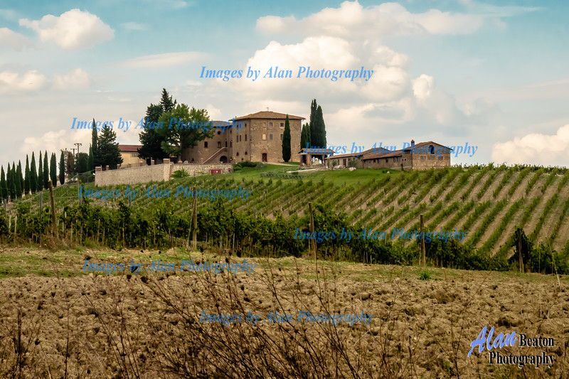 Vineyards, San Gimignano