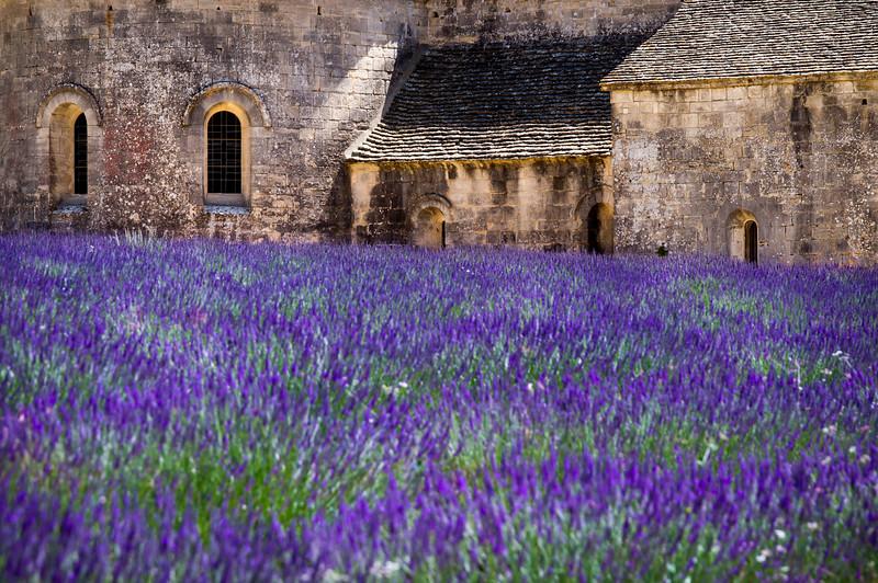 Lavender fields at Sénanque Abbey