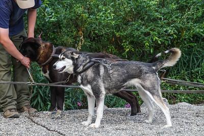 Denali National Park - Sled Dog Kennels