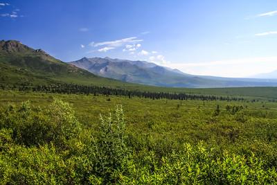 Denali National Park Tour
