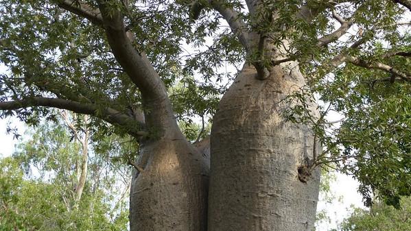 Darwin & Kakadu NP